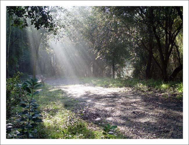 """фото """"llum"""" метки: природа, пейзаж, ночь, цветы"""
