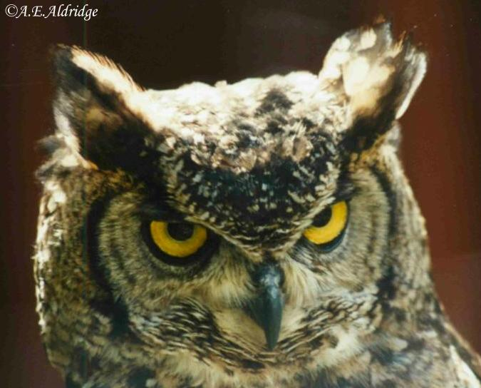 "фото ""Serious look"" метки: природа, разное, дикие животные"
