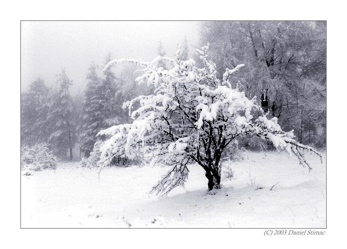 """фото """"winter"""" метки: черно-белые, пейзаж, зима"""
