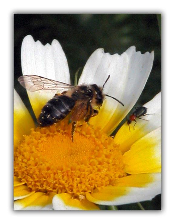 "фото ""Allotment"" метки: природа, насекомое"