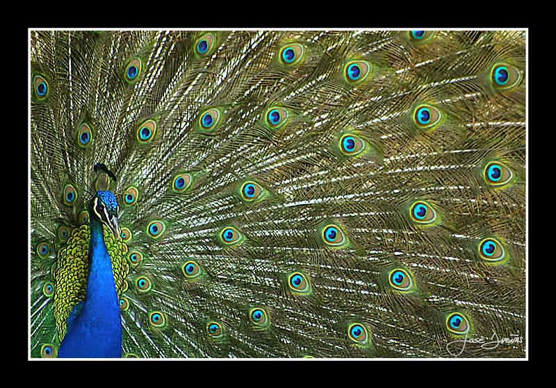 "фото ""Natural Beauty"" метки: природа, домашние животные"