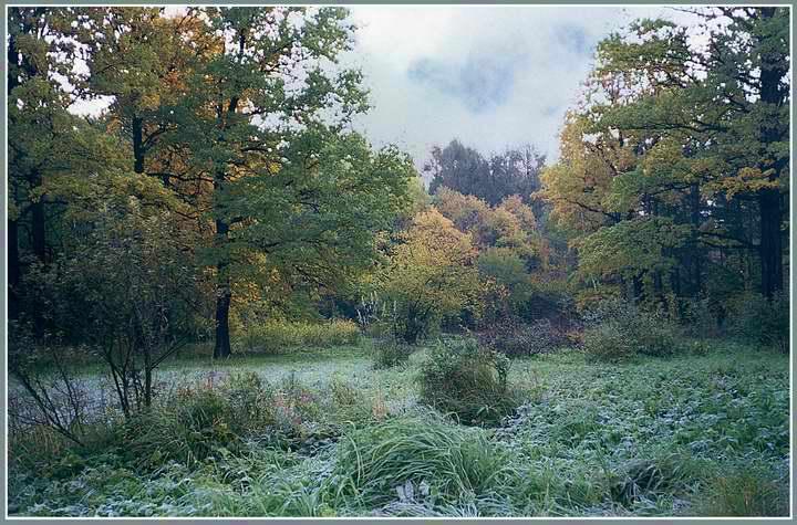 "фото ""Иней на траве"" метки: пейзаж, лес, осень"