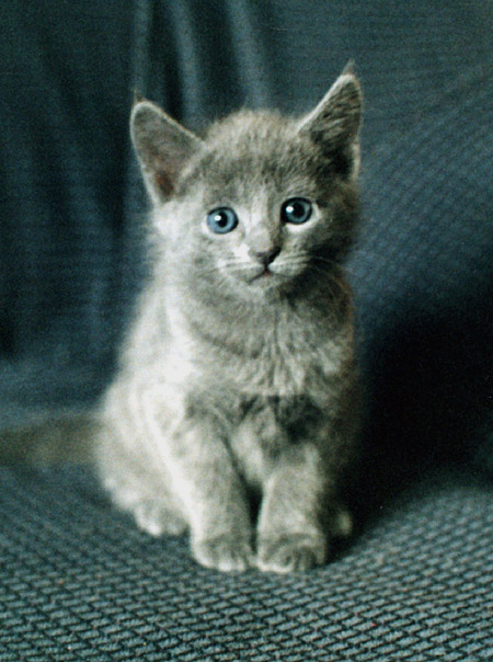 """фото """"Правильный котенок"""" метки: природа, домашние животные"""