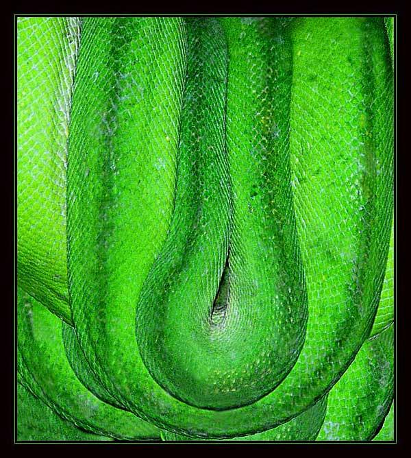 """фото """"Из дневников натуралиста 2"""" метки: природа, дикие животные"""