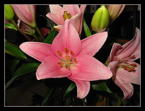"фото ""Лилия"" метки: природа, цветы"