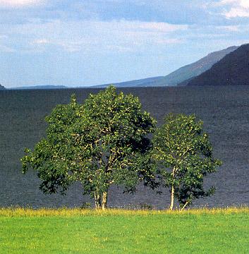 "фото ""Two Trees"" метки: природа, цветы"
