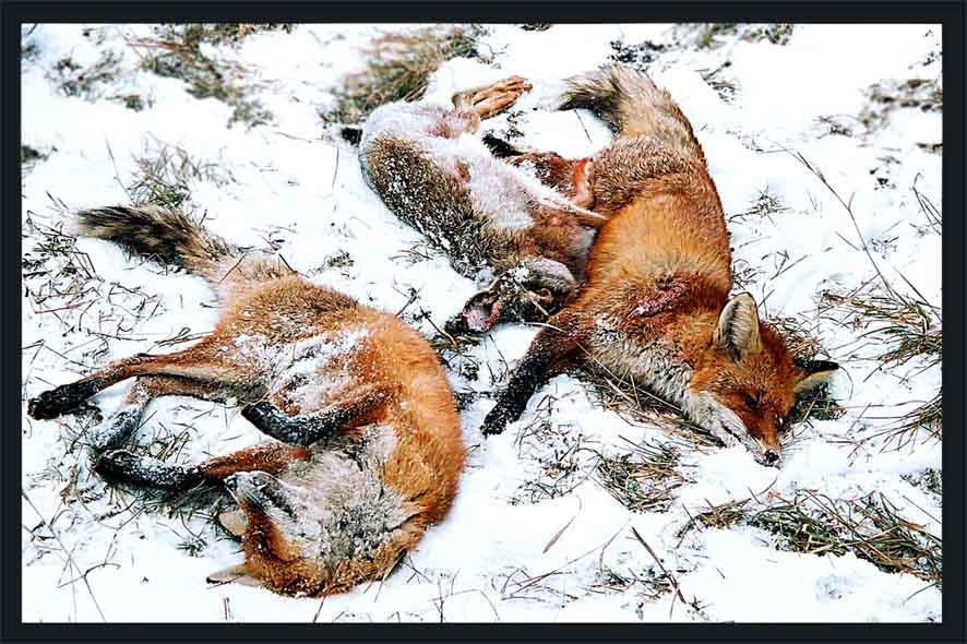 Картинка уничтожение животных для детей