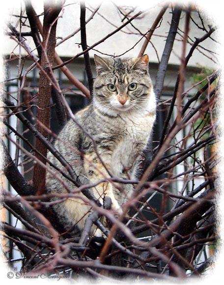 """фото """"Cat in the Tree"""" метки: природа, дикие животные"""