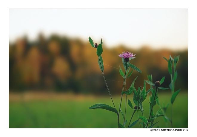 """фото """"последний"""" метки: пейзаж, лес, осень"""