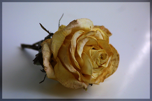"""фото """"Сухоцвет."""" метки: природа, разное, цветы"""