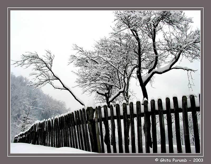 """фото """"Fence"""" метки: пейзаж, зима"""