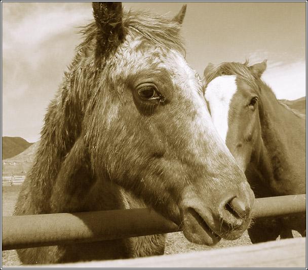 """фото """"О грустной лошади"""" метки: природа, домашние животные"""