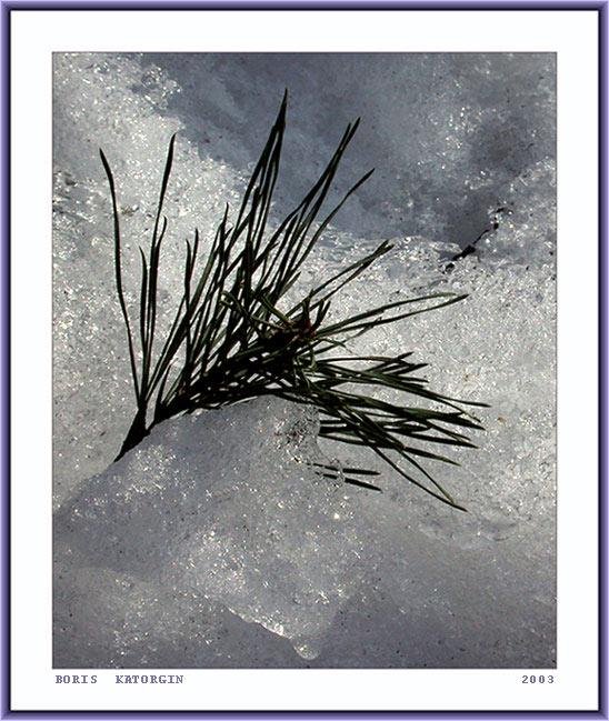 """фото """"Вмерзшая в лед"""" метки: макро и крупный план, природа, цветы"""