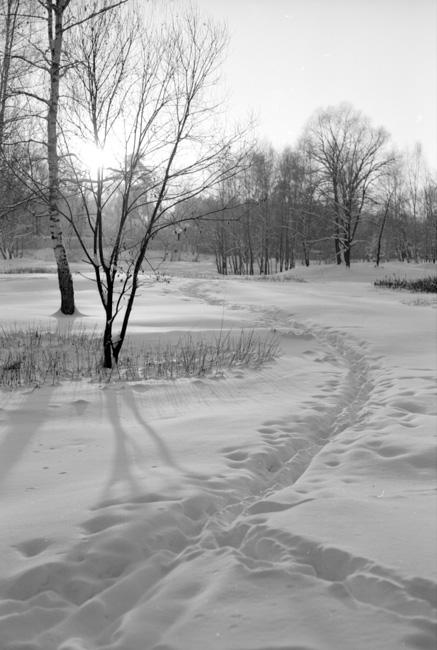 """фото """"-25"""" метки: пейзаж, черно-белые, зима"""