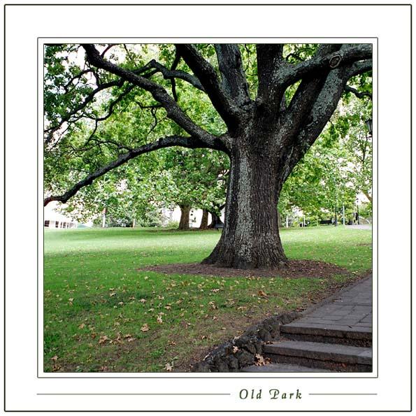 "фото ""Old Park"" метки: природа, цветы"