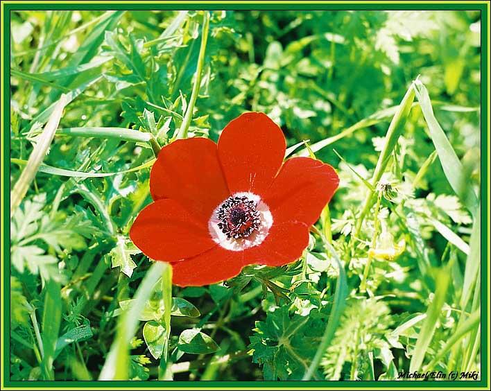 "фото ""Последняя (чес слово!)"" метки: природа, цветы"