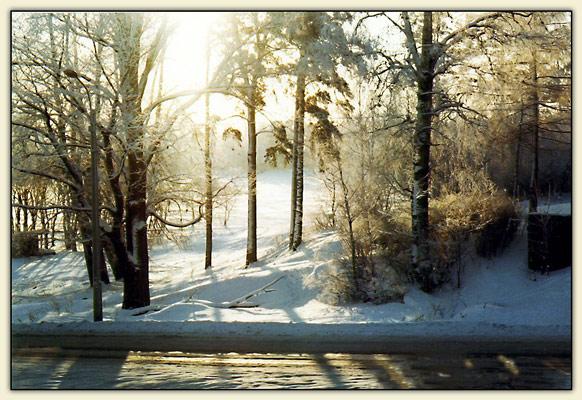 "фото ""Золото зимы"" метки: пейзаж, зима"