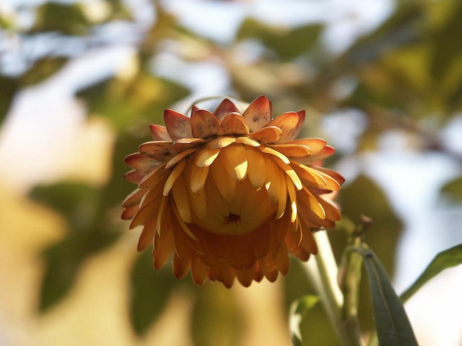 """фото """"сентябрьское солнце"""" метки: природа, цветы"""