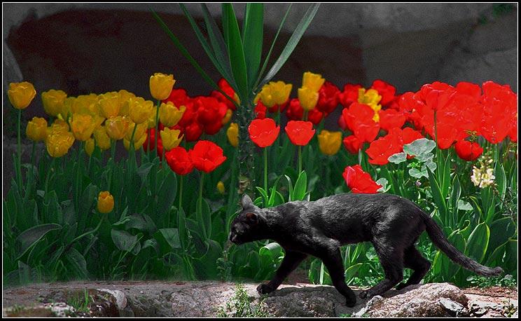 """фото """"Только черному коту не повезет....."""" метки: разное, пейзаж,"""