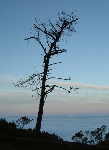 "фото ""Madeira"" метки: пейзаж, лес"