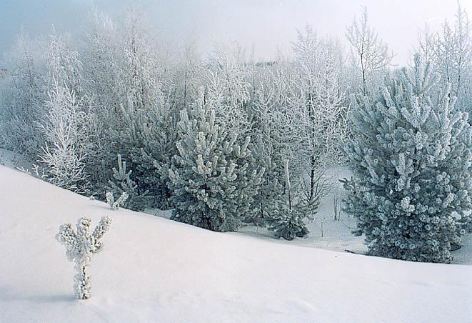 """фото """"Белый март"""" метки: пейзаж, зима"""