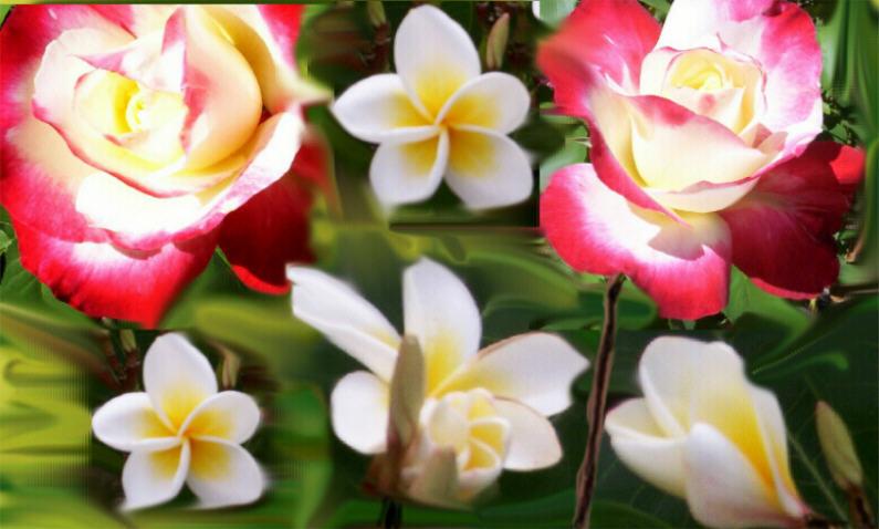 """фото """"Boquete of Flowers"""" метки: разное, фотомонтаж,"""