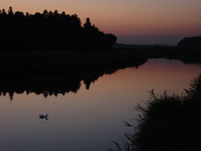"""фото """"Lonely"""" метки: природа, дикие животные"""