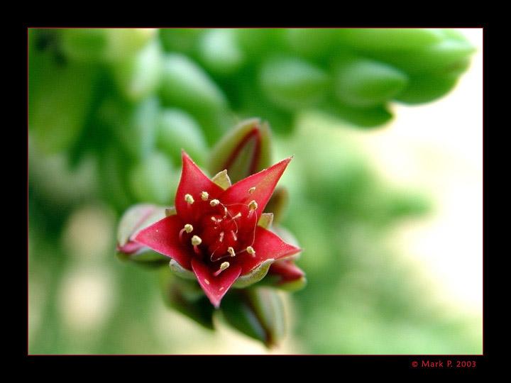 """фото """"Опасный вид"""" метки: макро и крупный план, природа, цветы"""