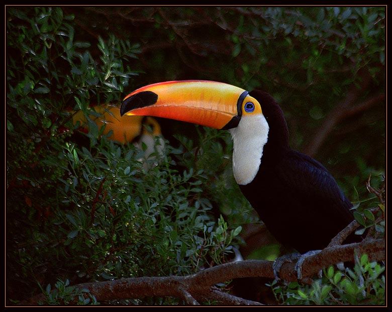 """фото """"Из дневников натуралиста"""" метки: природа, дикие животные"""