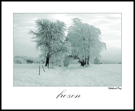 """фото """"frozen"""" метки: пейзаж, зима"""
