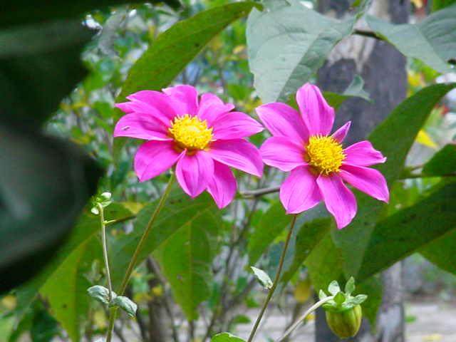 """фото """"Pink"""" метки: природа, цветы"""