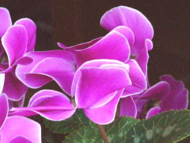 """фото """"Butterfly?"""" метки: природа, макро и крупный план, цветы"""