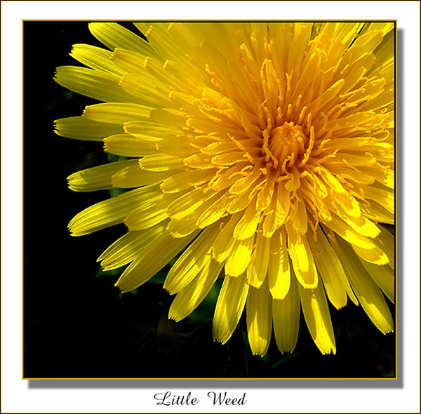 "фото ""Just a Dandelion"" метки: разное,"