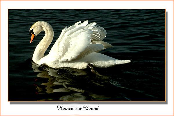 "фото ""Homeward bound"" метки: природа,"
