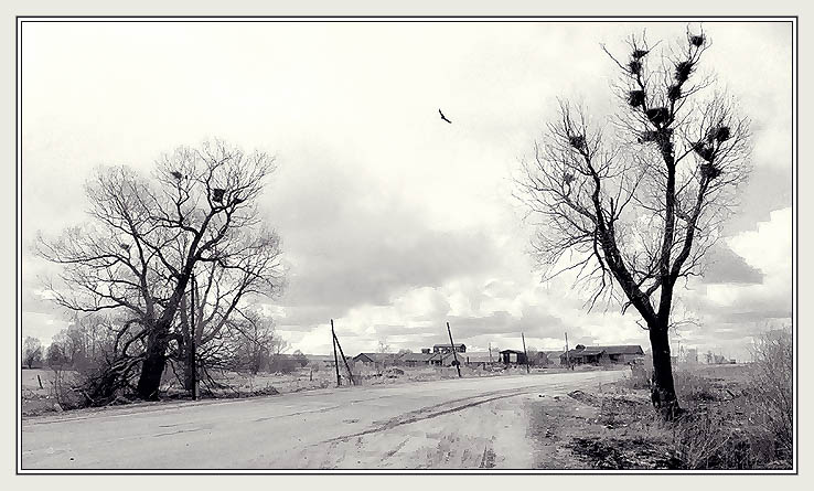 "photo ""Rural road"" tags: landscape, black&white,"