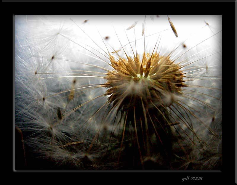"""photo """"galaxy"""" tags: abstract, macro and close-up,"""