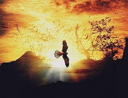"photo ""Flight"" tags: nature, montage,"