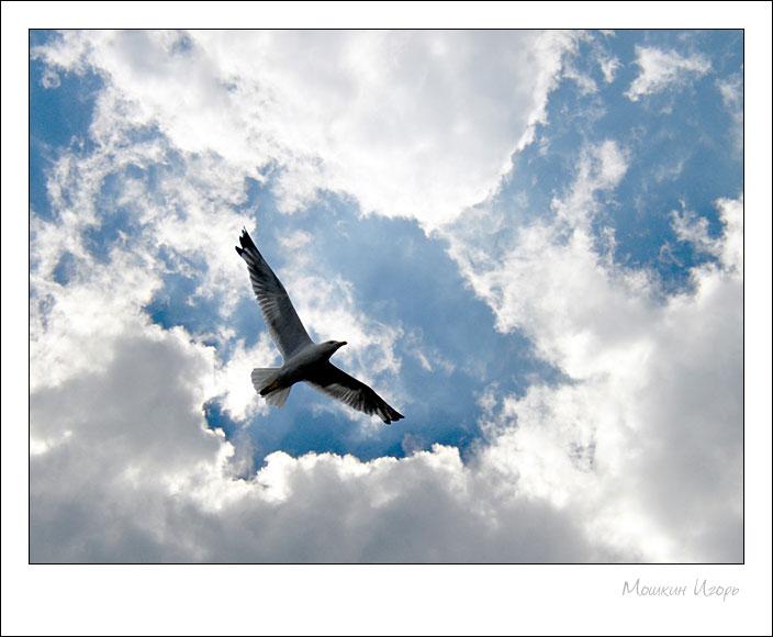 """фото """"Чайка 3"""" метки: природа, дикие животные"""