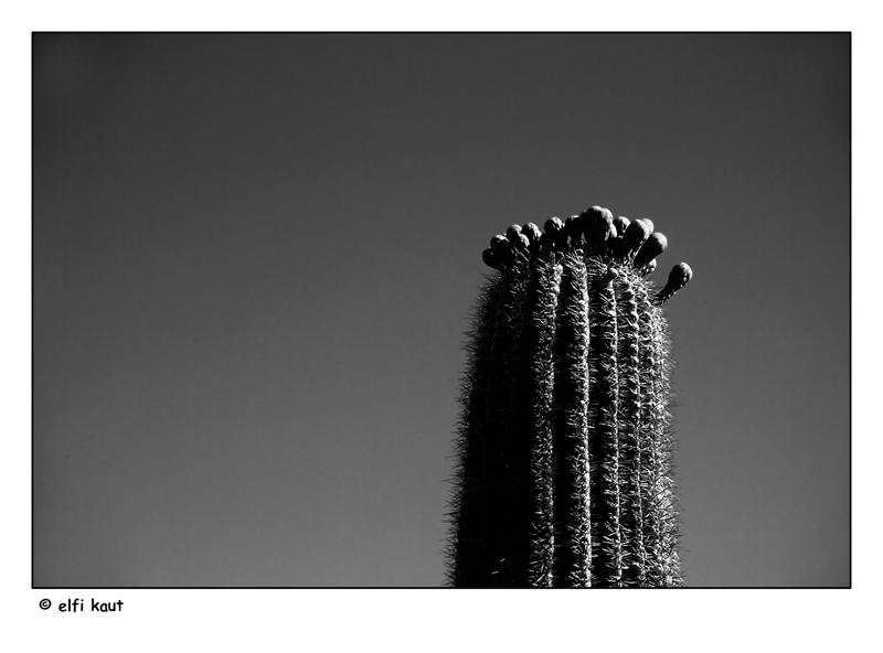 """фото """"mother cactus"""" метки: природа, цветы"""