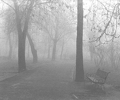 """photo """"Mist"""" tags: landscape, black&white, autumn"""