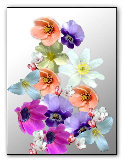 """фото """"April Showers"""" метки: макро и крупный план, природа, цветы"""