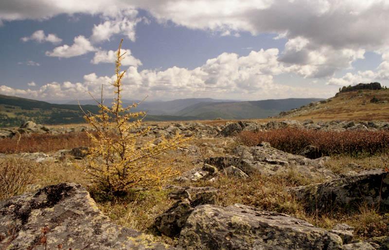 """фото """"Осень на Семинском перевале."""" метки: пейзаж, горы, осень"""