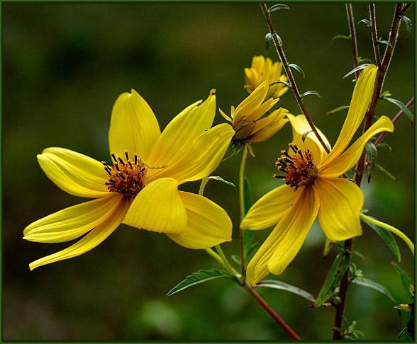 """фото """"September`s Last Song"""" метки: природа, макро и крупный план, цветы"""