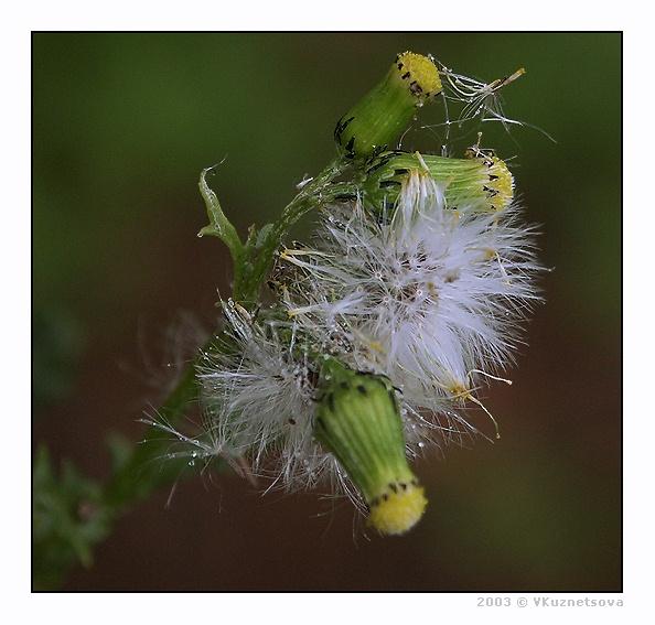 """фото """"****"""" метки: макро и крупный план, природа, цветы"""