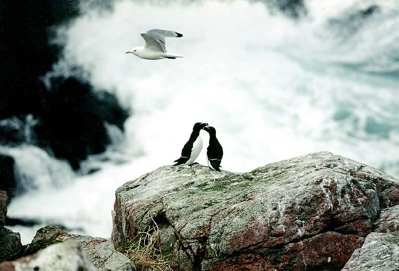"""фото """"Разные судьбы"""" метки: природа, дикие животные"""