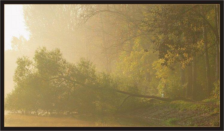 """фото """"Утро туманное, Утро седое"""" метки: пейзаж, лес, осень"""