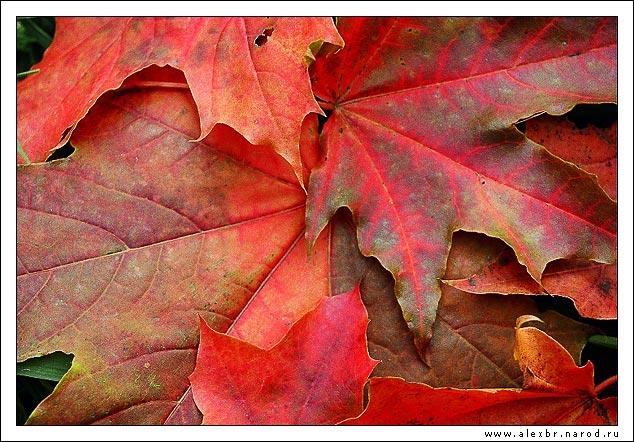 """фото """"Осень красная"""" метки: природа, натюрморт, цветы"""