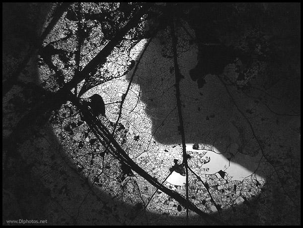 """фото """"Книга джунглей"""" метки: разное,"""
