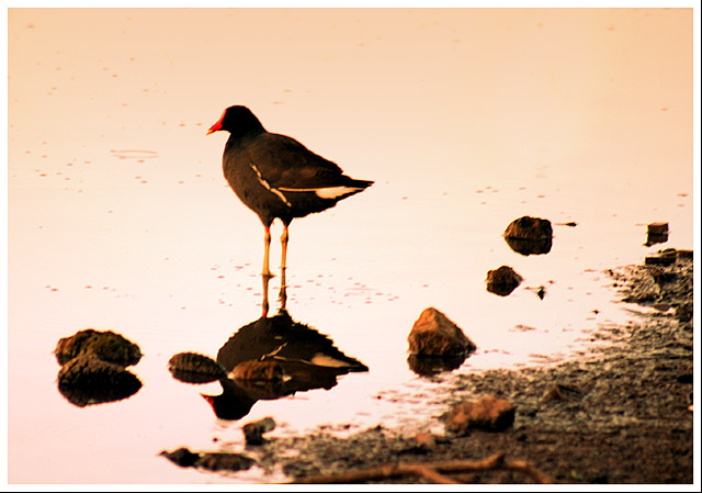 "фото ""the bird"" метки: природа, дикие животные"