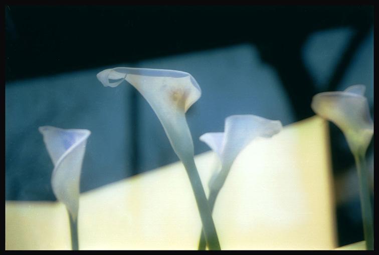 "фото ""Flower power-2"" метки: природа, цветы"